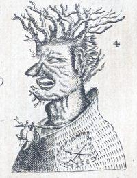 Olearius detail